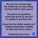 Homeless pets - Help foster