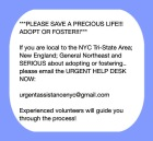 Homeless pets - Help fostering NYC help