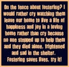 Homeless pets - Help fostering saves lives 02