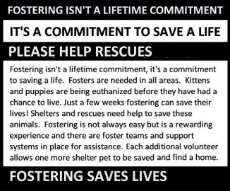 Homeless pets - Help fostering saves lives long USE