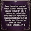 Homeless pets - Help fostering saves lives short USE