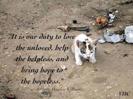 Homeless pets - Help it is our duty