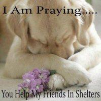 Homeless pets - Help prayer for shelter dogs