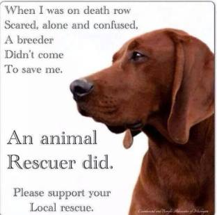 Homeless pets - Help rescued by a rescuer not breeder