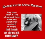 Homeless pets - Help rescuers are blessed