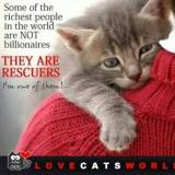 Homeless pets - Help rescuers some of the richest people in world