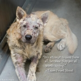 Homeless pets - Help save them all they are all worth