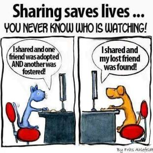 Homeless pets - Help sharing saves lives