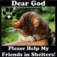 Homeless pets - Help shelters pray cat help my friends