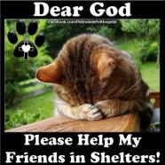 Homeless pets - Help shelters pray cat help my friends