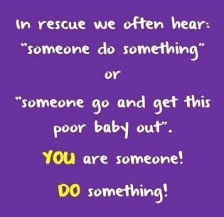 Homeless pets - Help someone do something