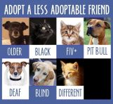 Homeless pets - Help special needs adoptable friend