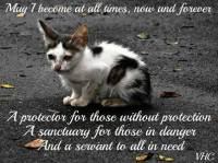 Homeless pets - Help the strays