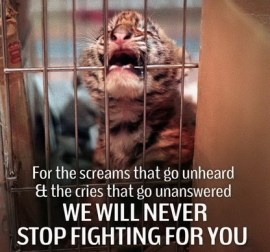 Homeless pets - Help we will never stop fighting tiger cub