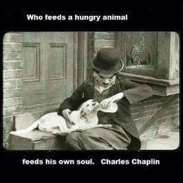 Homeless pets - Help who feeds an animal feeds his soul