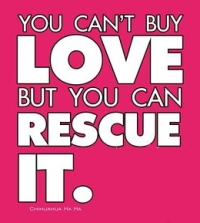 Homeless pets - Help you can't buy love but you can rescue it 02