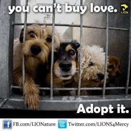 Homeless pets - Help you can't buy love but you can rescue it 03