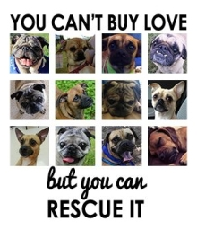Homeless pets - Help you can't buy love but you can rescue it 04