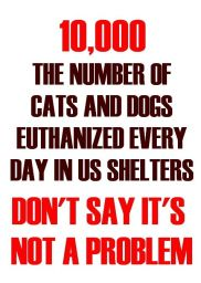 Homeless pets - Kill 10,000 euthanised daily in US shelters