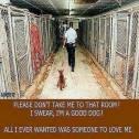 Homeless pets - Kill a corridor