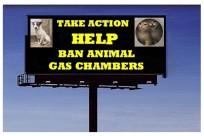 Homeless pets - Kill billboard help ban animal gas chambers
