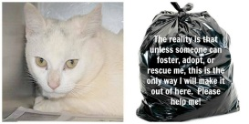 Homeless pets - Kill black bag cat white