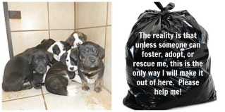 Homeless pets - Kill black bags and puppies