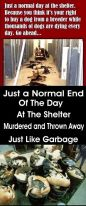 Homeless pets - Kill black bags and thrown away