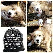 Homeless pets - Kill black bags cute mongrel
