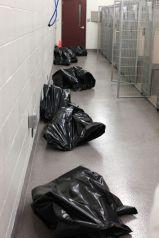 Homeless pets - Kill black bags in corridor