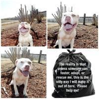 Homeless pets - Kill black bags white pittie