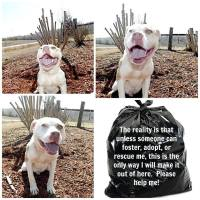 Homeless pets - Kill black bags white pittie