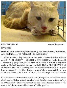 Homeless Pets - Kill Blanket in memoriam