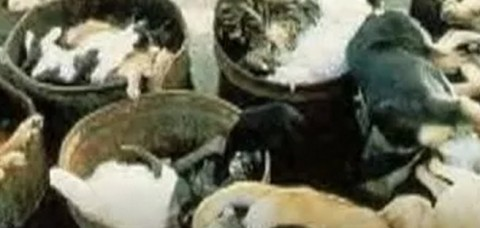 Homeless pets - Kill bodies cats and dogs