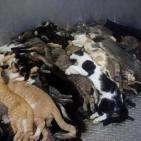 Homeless pets - Kill bodies cats