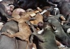 Homeless pets - Kill bodies dogs