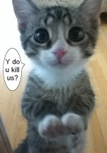 Homeless pets - Kill cat why do you kill us