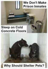 Homeless pets - Kill cruel