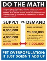 Homeless pets - Kill do the math