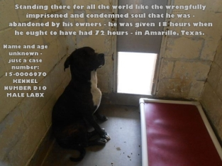 Homeless pets - Kill dog at Amarillo given only 18 hours