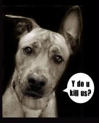 Homeless pets - Kill dog why do you kill us