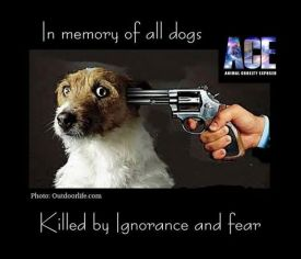Homeless pets - Kill dogs in memory of all killed