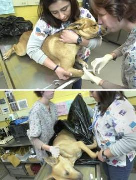 Homeless pets - Kill euthanizing a dog