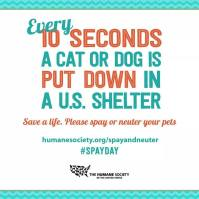 Homeless pets - Kill every 10 seconds a dog is put down in US Kill