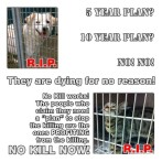 Homeless pets - Kill for no reason