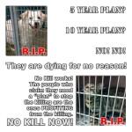 Homeless pets - Kill for no reason