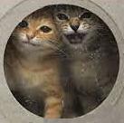 Homeless pets - Kill gas chamber kittens