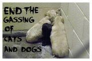 Homeless pets - Kill gas reality of