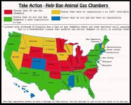 Homeless pets - Kill gassing map US