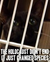 Homeless pets - Kill holocaust didn't change cat